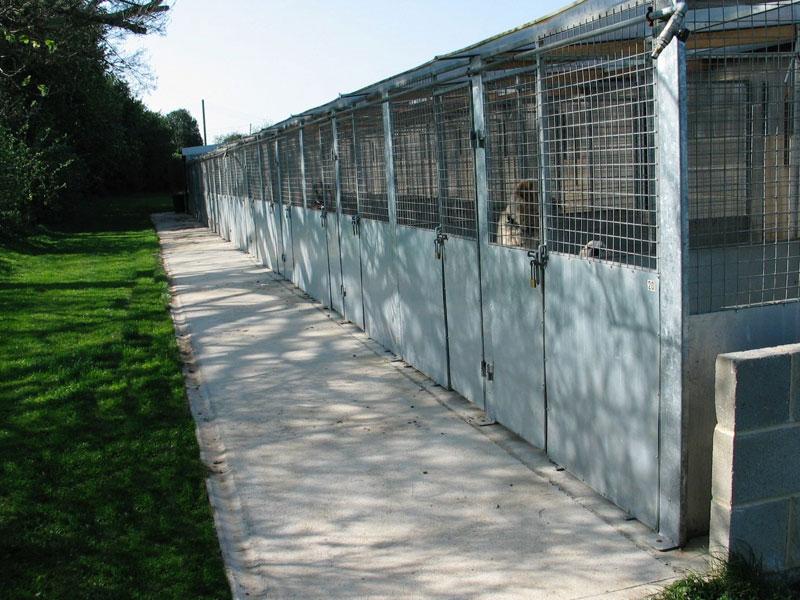 Dog Training Kennels Near Me